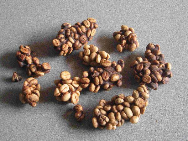 Cà phê chồn trải qua quá trình tiêu hóa trong ruột loài chồn.