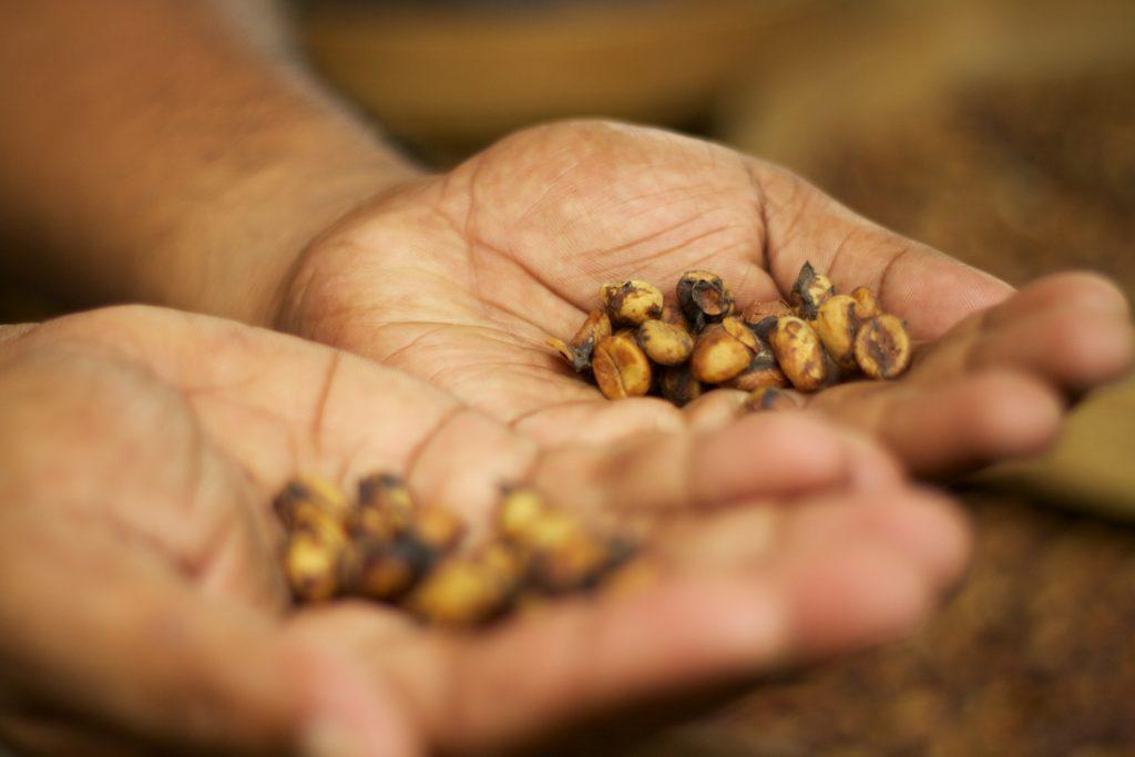 Cà phê chồn trang trại phổ biến giá rẻ hơn.